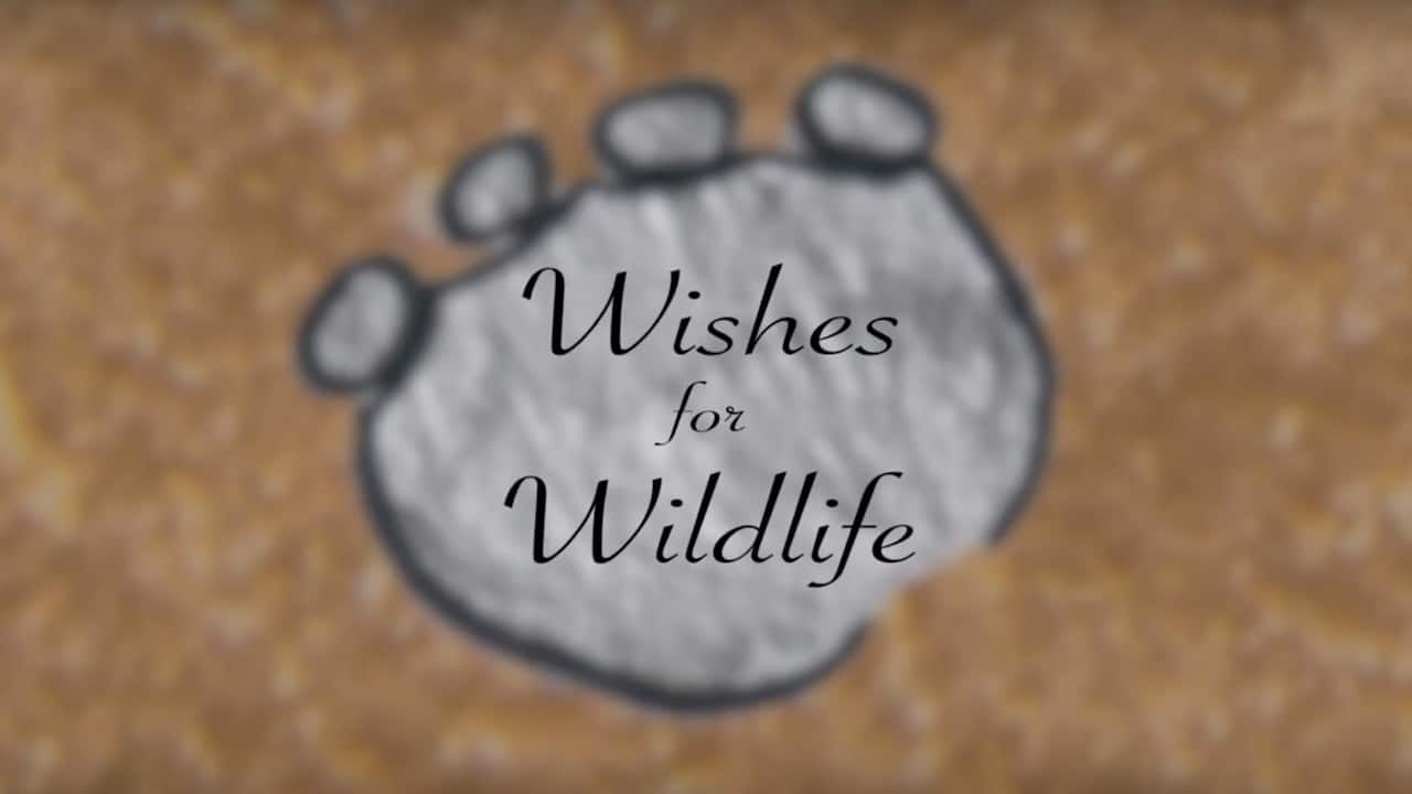 Make Wishes and Take Action for Wildlife In The New Year