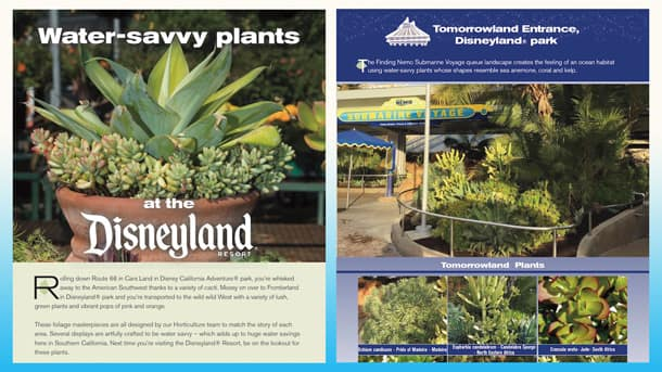 How to Spot Water-Savvy Plants at the Disneyland Resort
