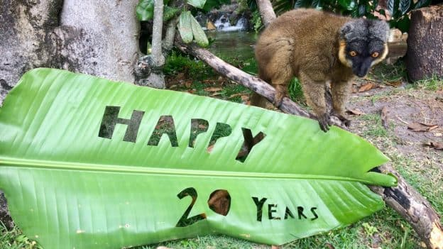 Residents of Disney's Animal Kingdom Celebrate 20 Years