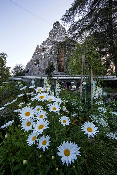 Matterhorn through the flowers, Disneyland park