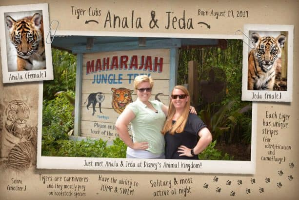 New Disney PhotoPass Magic Shot Maharajah Jungle Trek at Disney's Animal Kingdom