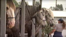 Circle D Ranch, Home to the Horses of the Disneyland Resort