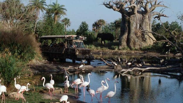 How Well Do You Know Kilimanjaro Safaris? - QUIZ