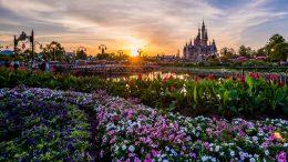 The Sun Sets at Shanghai Disneyland