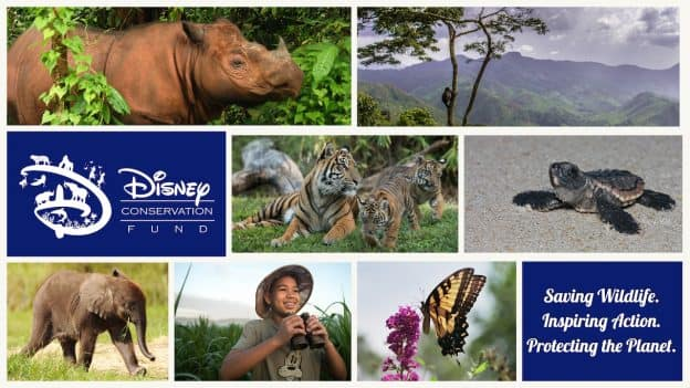 Disney Conservation Fund Collage