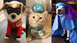 Disney Springs Cast Members' Pets Are Dressed To Impress in Costumes Perfect for Halloween and Beyond
