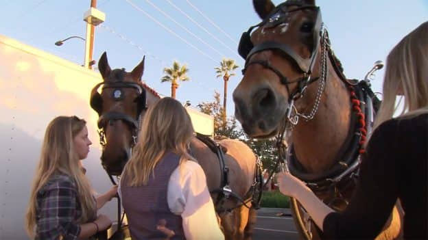 Disneyland Resort Horses Materialize at the Anaheim Halloween Parade