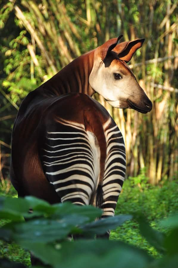 Meg Pahel, Wild Africa Trek Excursion Guide – Okapi