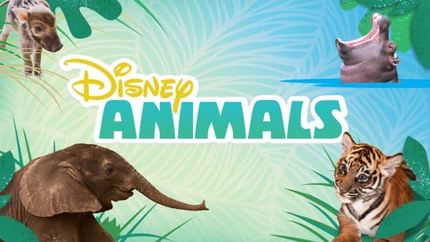 DisneyNOW App Features New Disney Animals Videos