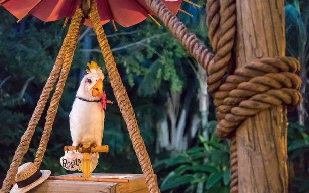 Rosita the cockatoo