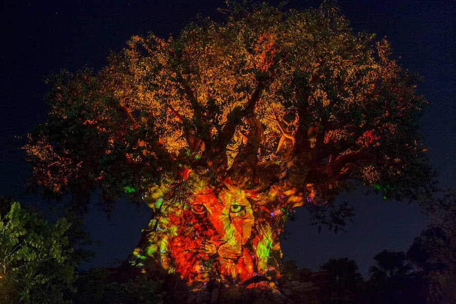 Celebrating The Lion King At Disney S Animal Kingdom Disney Parks Blog