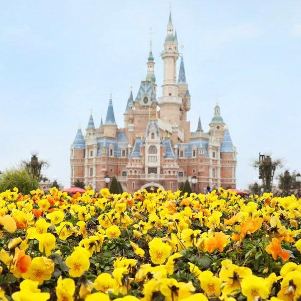 Flowers in bloom at Shanghai Disneyland