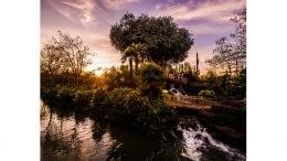 Disney Parks After Dark: La Cabane de Robinson