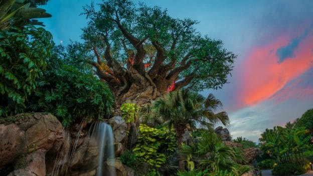 Tree Life at Disney's Animal Kingdom