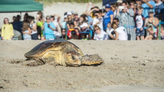 12th Annual Tour de Turtles at Disney's Vero Beach Resort