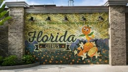 New Orange Bird Wall at Disney Springs