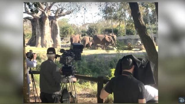 Filmmakers at Disney's Animal Kingdom