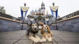 'Lady and the Tramp' Stars at Disneyland Park