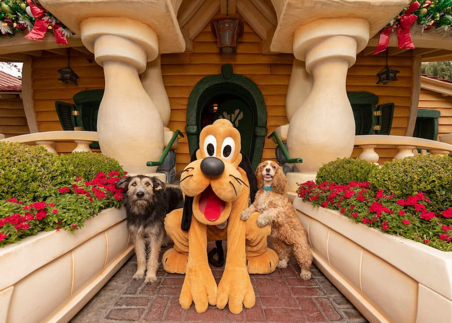 Lady And The Tramp Stars Celebrate Disney Film With A Tail Wagging Good Time At Disneyland Park Disney Parks Blog