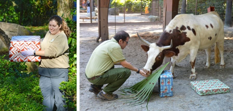Disney's animal care team cast members create enrichment for animals for the holidays