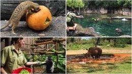 collage of animals at Disney's Animal Kingdom