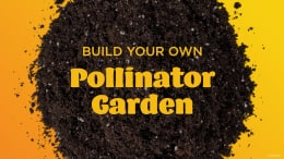 Learn How to Create a Pollinator Garden for Your Home from Walt Disney World Expert