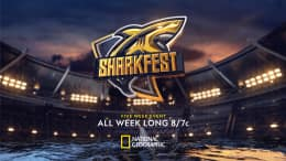 Sharkfest Five Night Event, all week long on National Geographic at 8/7c