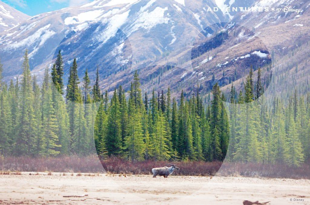 Adventures by Disney Alaska - Virtual Background