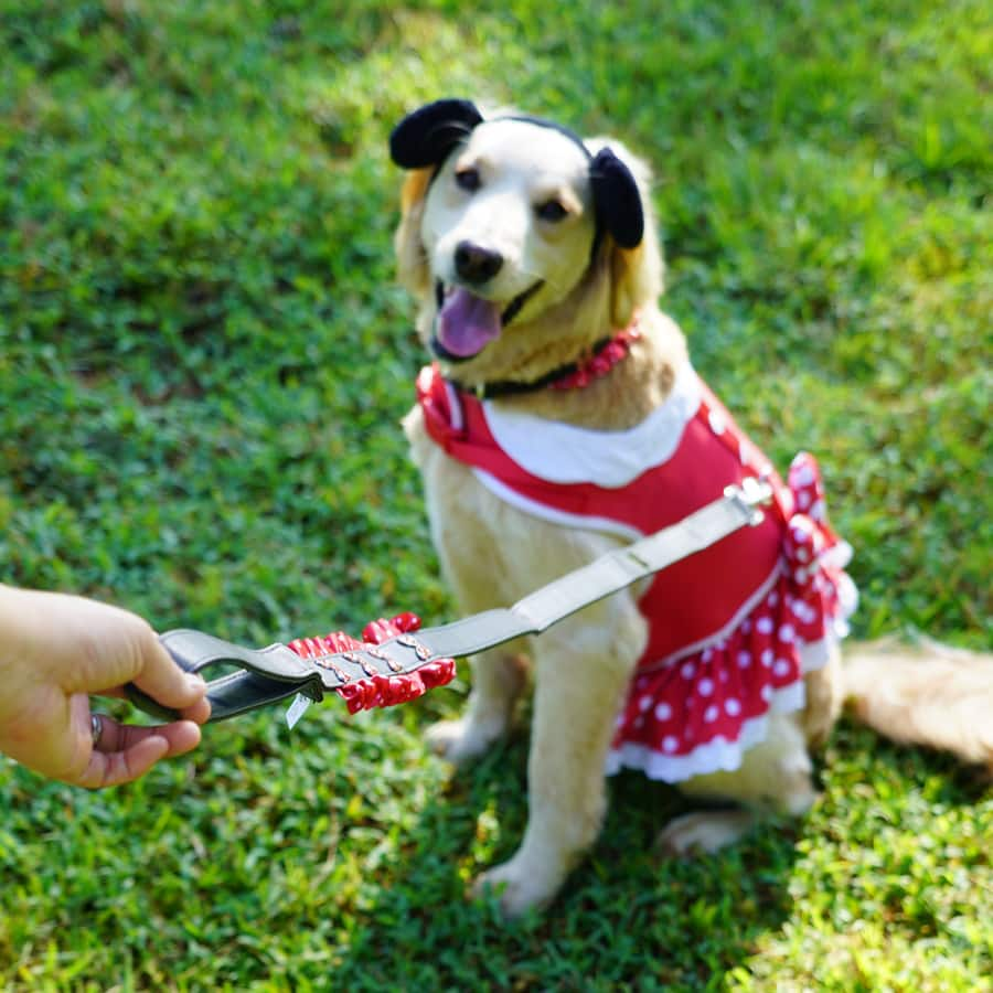 Dog wearing Minnie Mouse Costume Harness and Lead