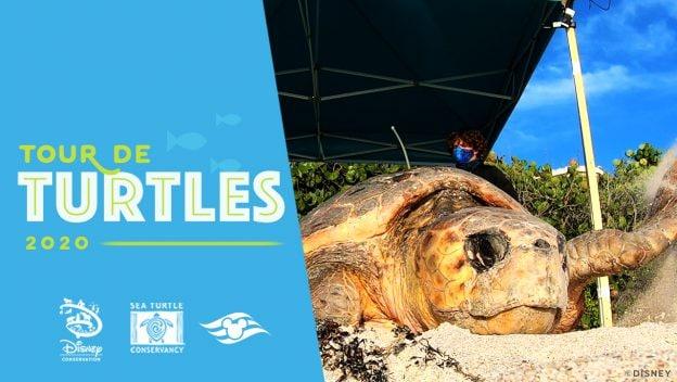 Tour de Turtles logo