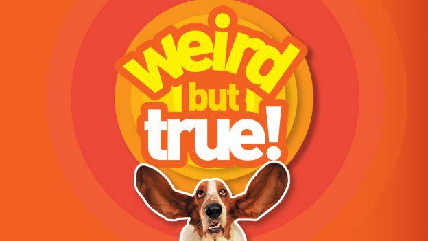 Weird But True! show logo