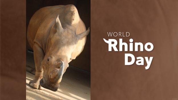 World Rhino Day graphic