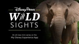 "Disney Parks ""Wild Sights"" - an all-new mini series on the My Disney Experience App"