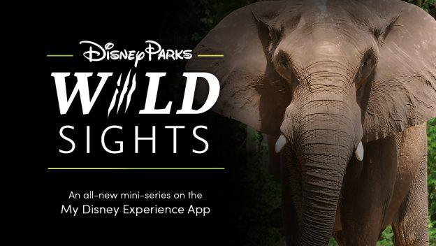 "Disney Parks ""Wild Sights"" - an all-new mini series on the My Disney Experience App"