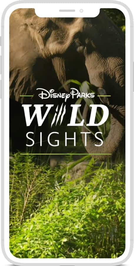 "Disney Parks Wild Sights"" Video Series"