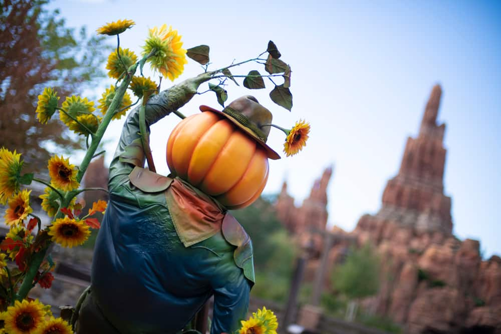 Pumpkins at Frontierland in Disneyland Paris
