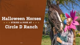 Horses Strike a Pose at Circle D Ranch graphic