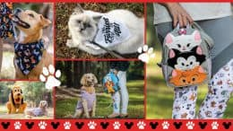 Collage of Reigning Cats and Dogs Collection