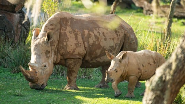 Ranger the Rhino
