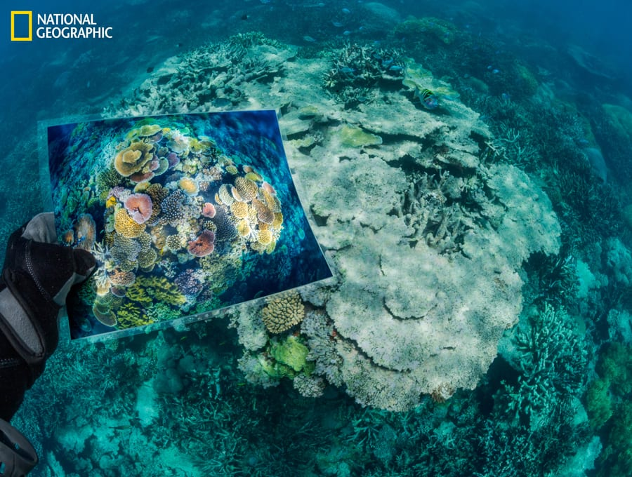 """NGS150S18_181211_02958.jpg Opal Reef, part of Australia's Great Barrier Reef, was damaged when ocean temperatures spiked in 2016 and 2017. """"The once colorful coral was a gray ruin and all but dead—a skeletal statue created by climate change,"""" says David Doubilet. To document how climate change affects reefs, he and Jennifer Hayes returned to some of the most stunning corals they'd previously photographed. (David Doubilet/National Geographic)"""