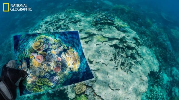 """Opal Reef, part of Australia's Great Barrier Reef, was damaged when ocean temperatures spiked in 2016 and 2017. """"The once colorful coral was a gray ruin and all but dead—a skeletal statue created by climate change,"""" says David Doubilet. To document how climate change affects reefs, he and Jennifer Hayes returned to some of the most stunning corals they'd previously photographed. (David Doubilet/National Geographic)"""