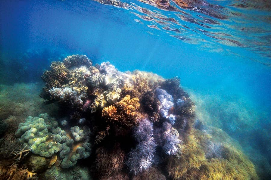 Outer reef in Australia, Adventures by Disney