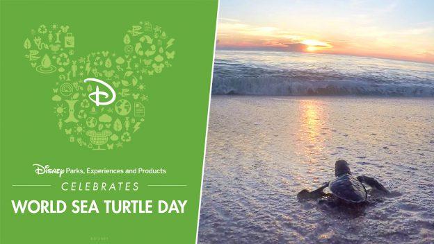 Sea Turtle Day graphic