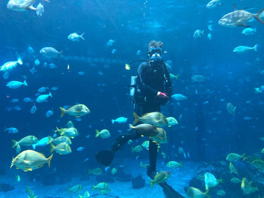 Dive Master at The Seas