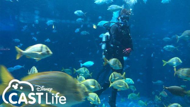 Disney Cast Life   Dive Master