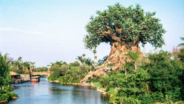 Photo of the Tree of Life in 1998 by Steven Miller