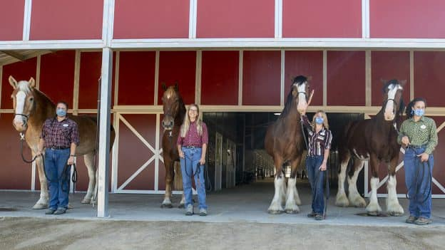 New Disneyland Resort Horses at Circle D Ranch