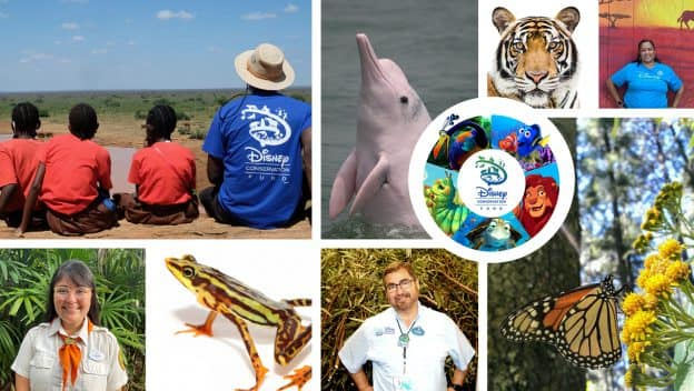 Collage of Disney Conservation Fund projects and cast members