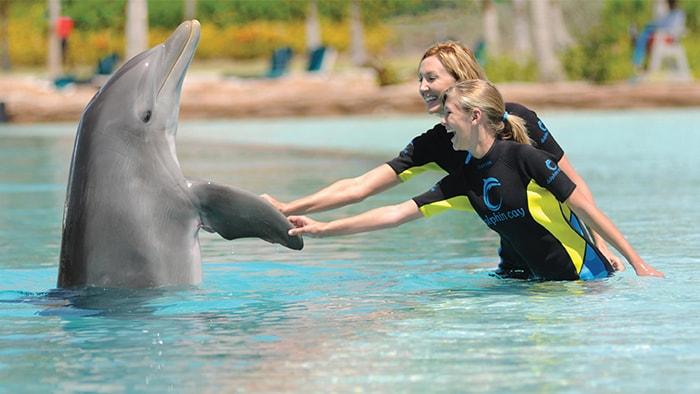 Duas mulheres com roupa de mergulho sorriem enquanto interagem com um golfinho.