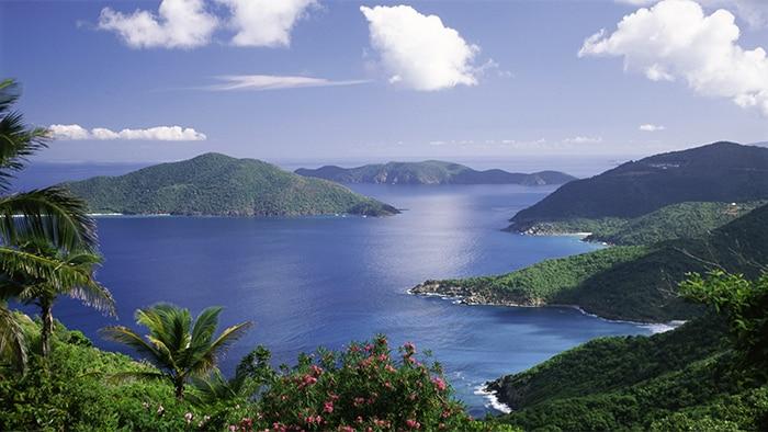 Une entrée dans un littoral des Caraïbes riche en fleurs, en palmiers et en arbustes